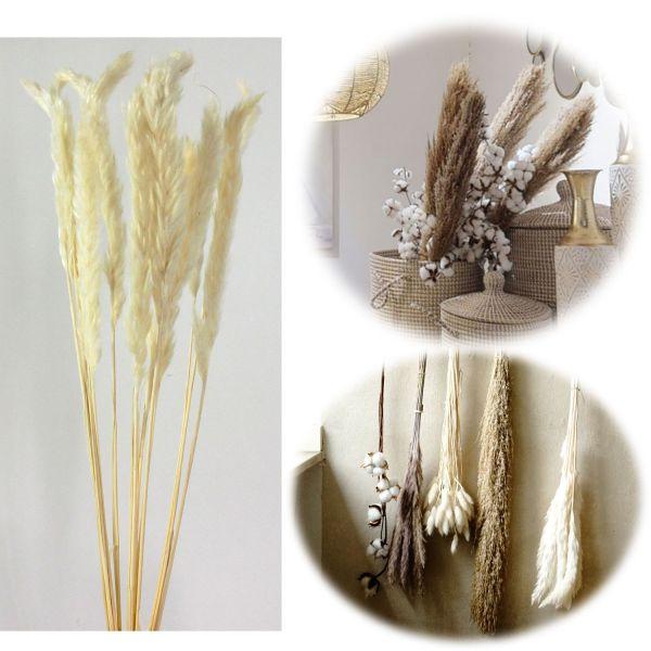 15x Pampasgras Trockenstrauß 70-80cm Weiß Naturprodukt Boho Trockenblumen