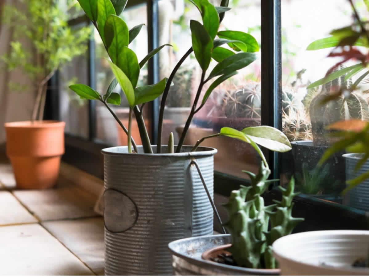 coole blument pfe blumenk sten vasen ls lebenstil. Black Bedroom Furniture Sets. Home Design Ideas