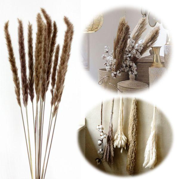 15x Pampasgras Trockenstrauß 70-80cm Braun Naturprodukt Boho Trockenblumen